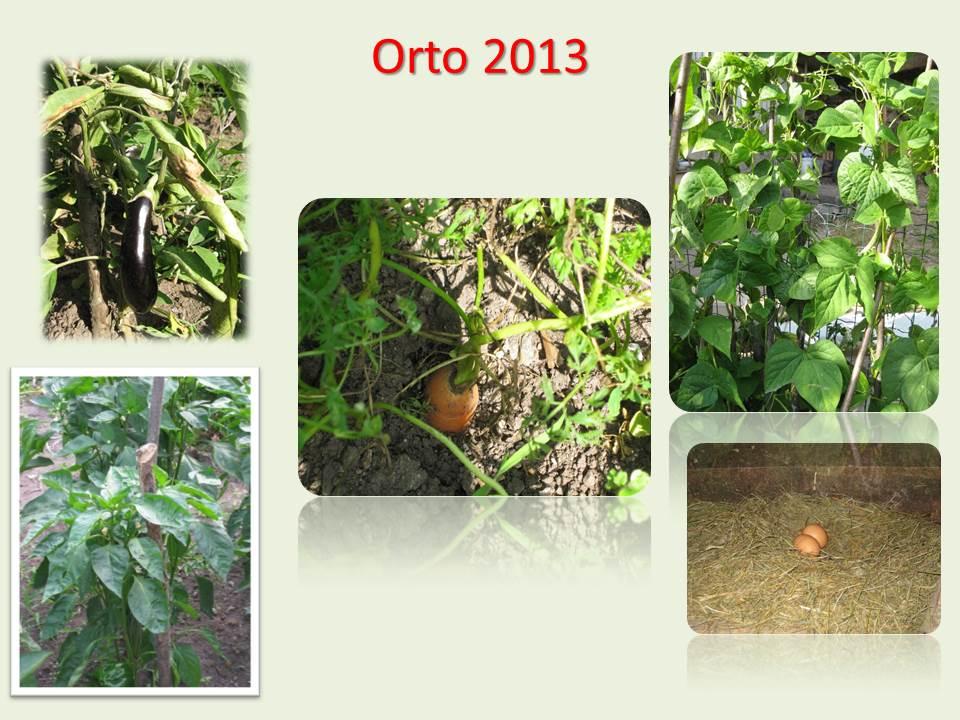 ORTO 2013